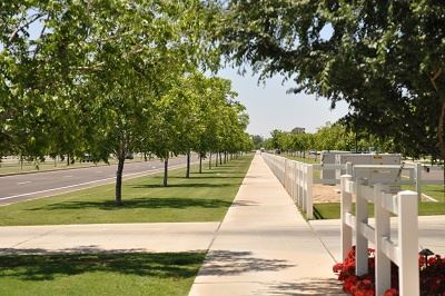 Sidewalk Lined by a Row of Trees on the Left, and a White Fence on the Right