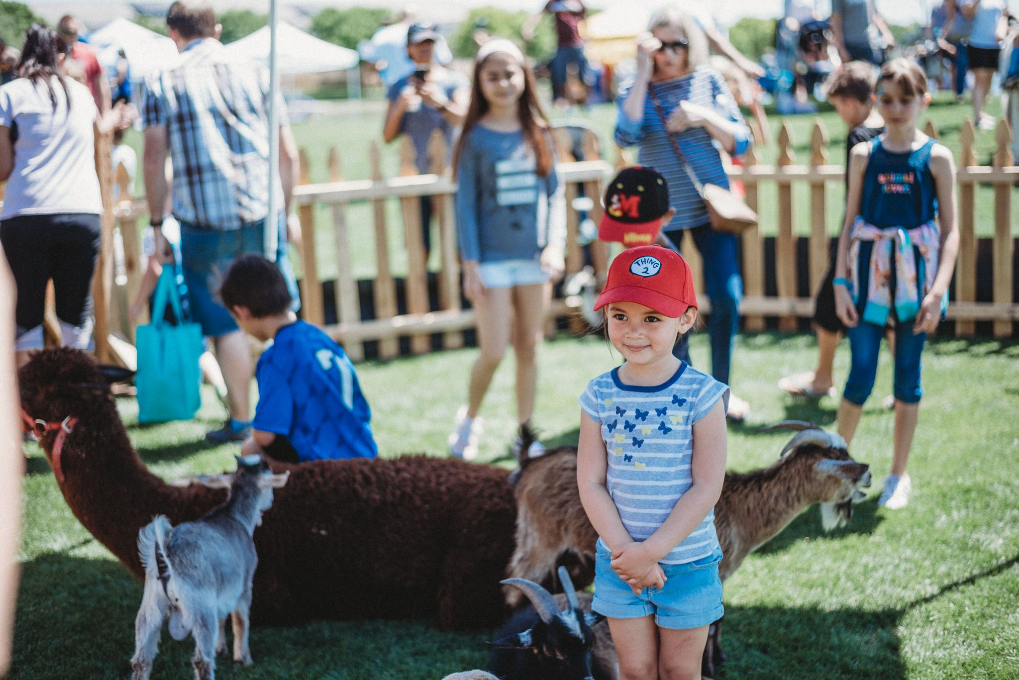 Toddler Posing Amidst Petting Zoo Goats and Sheep 2